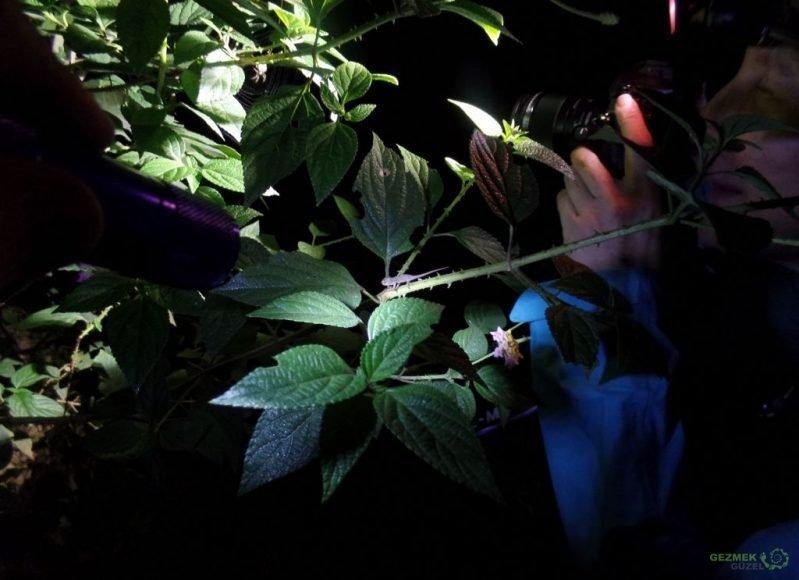 Andasibe Gece Hayatı, Gece Yürüyüşü, Madagaskar