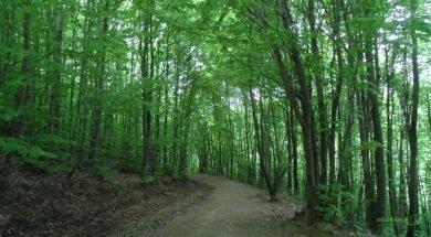 Belgrad Ormanı, İstanbul Çevresinde Güzel Bir Haftasonu