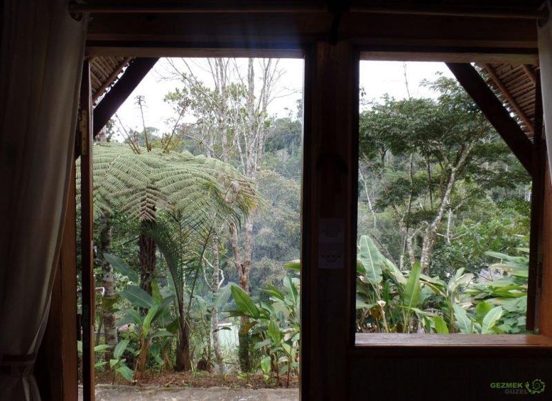Feon'ny Ala oteli odamızın manzarası, Andasibe Konaklama, Madagaskar