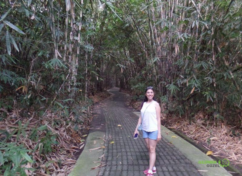 Bambu Ormanında, Penglipuran Village, Bali Gezisi