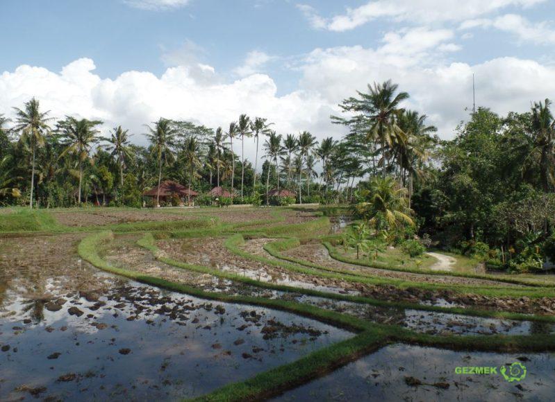 Pirinç Tarlaları, Bali'de Balayı