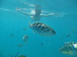 Bol balıklı Şnorkel, Gili Adaları