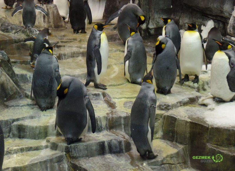 SeaWorld, Antarctica, Penguenler