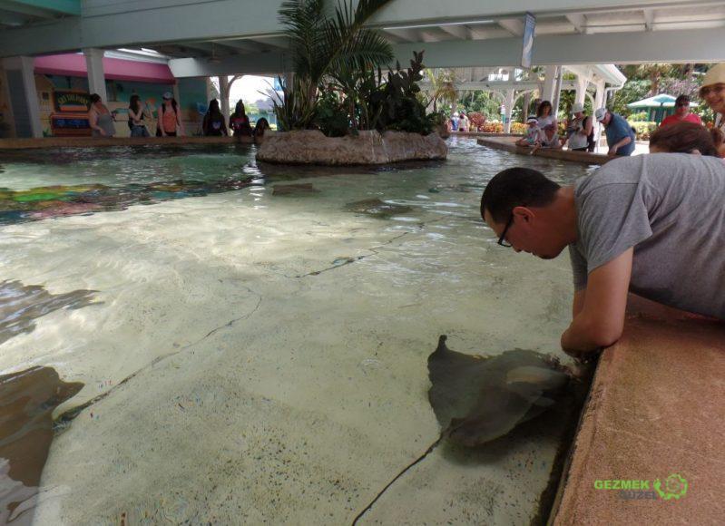 SeaWorld, Manta Besleme Havuzu