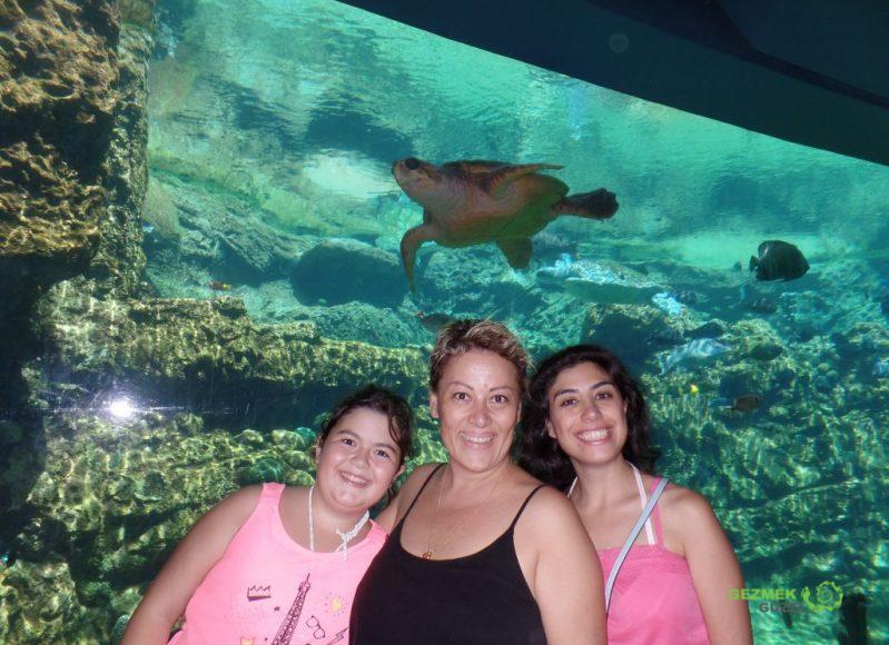 SeaWorld, Turtle Trek