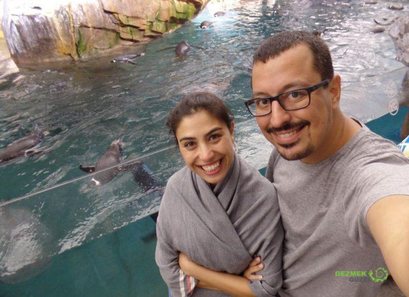 SeaWorld'de Penguenler ve biz