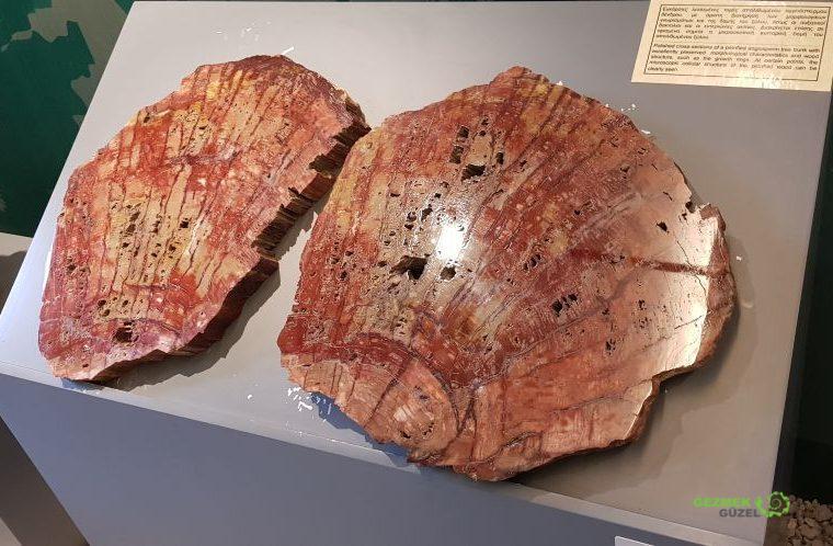 Midilli Taşlaşmış Ormanı Doğal Tarih Müzesi, Midilli Gezilecek Yerler