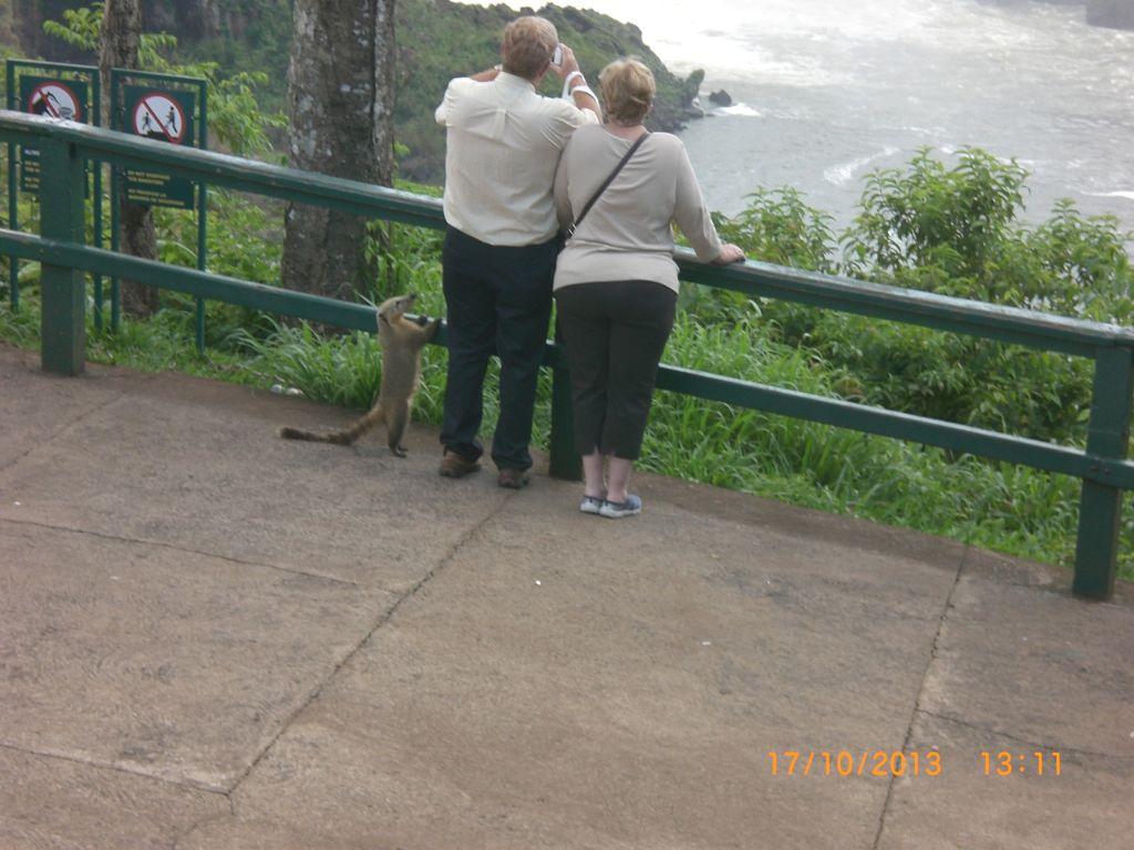 Foz do Iguaçu (Igasu Şelalesi) meraklı hayvanalar