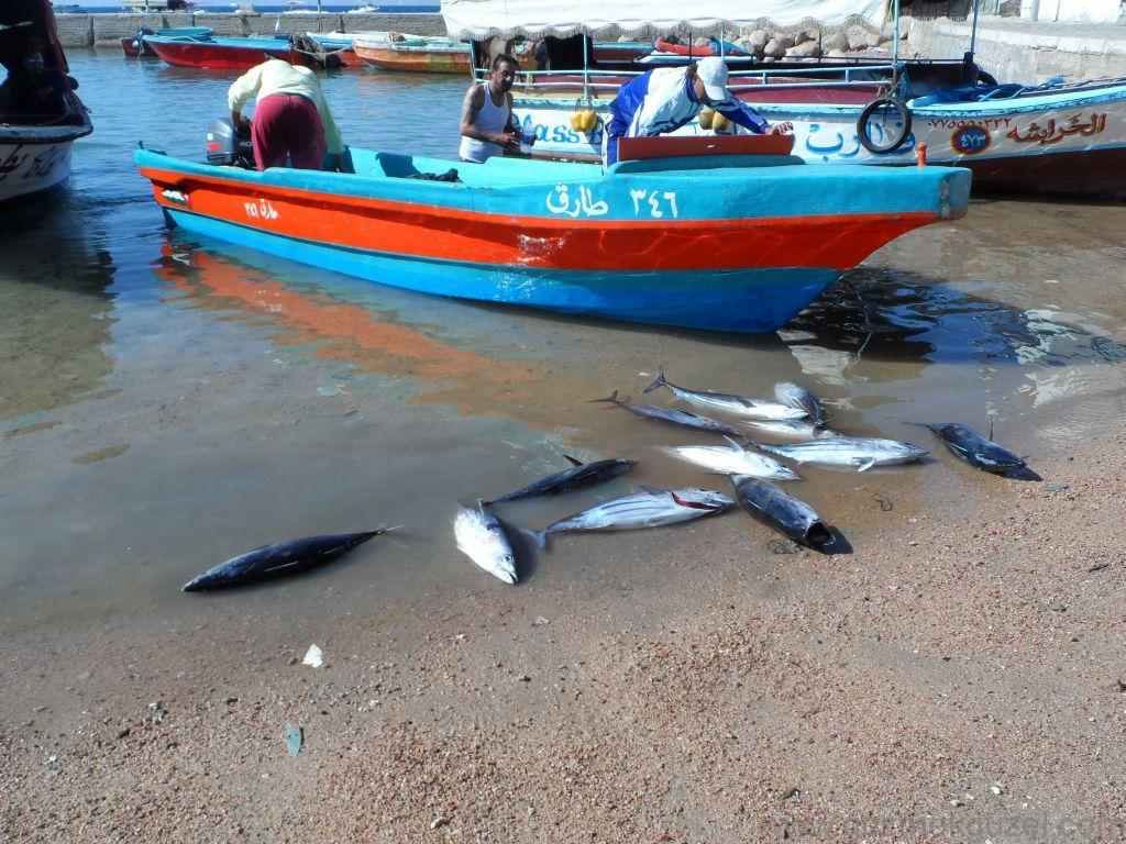 Akabe Balıkçıları