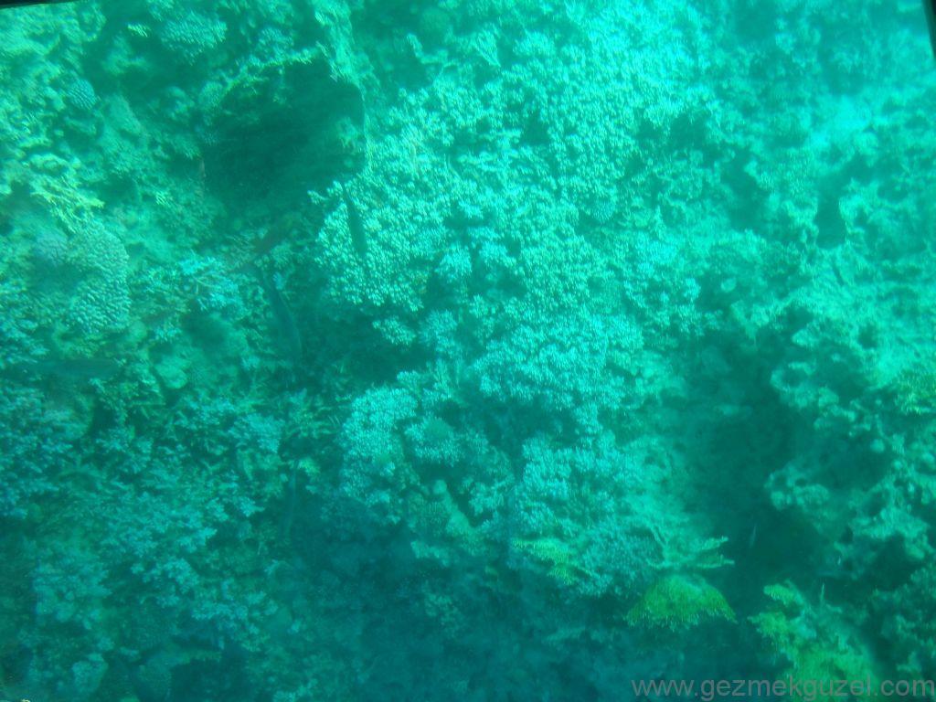 Akabe'de Cam Tabanlı Tekneden Resifler