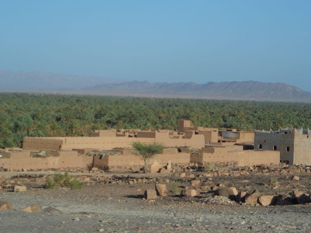 Atlas Dağlarında Palmiye Üretimi Fas Zagora