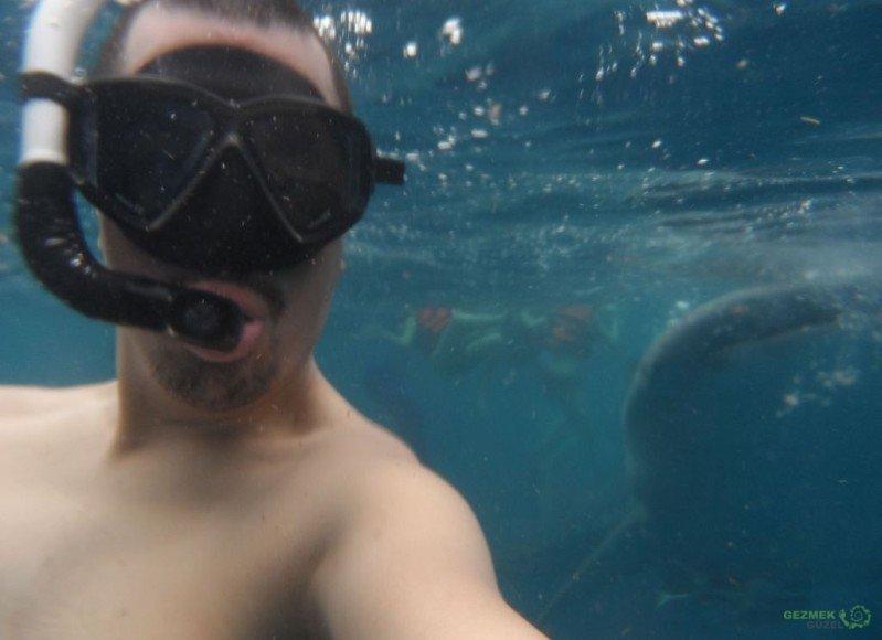 Balina Köpekbalığı ile özçekim, Balina Köpekbalığı Dalışı, Filipinler Gezisi Notları