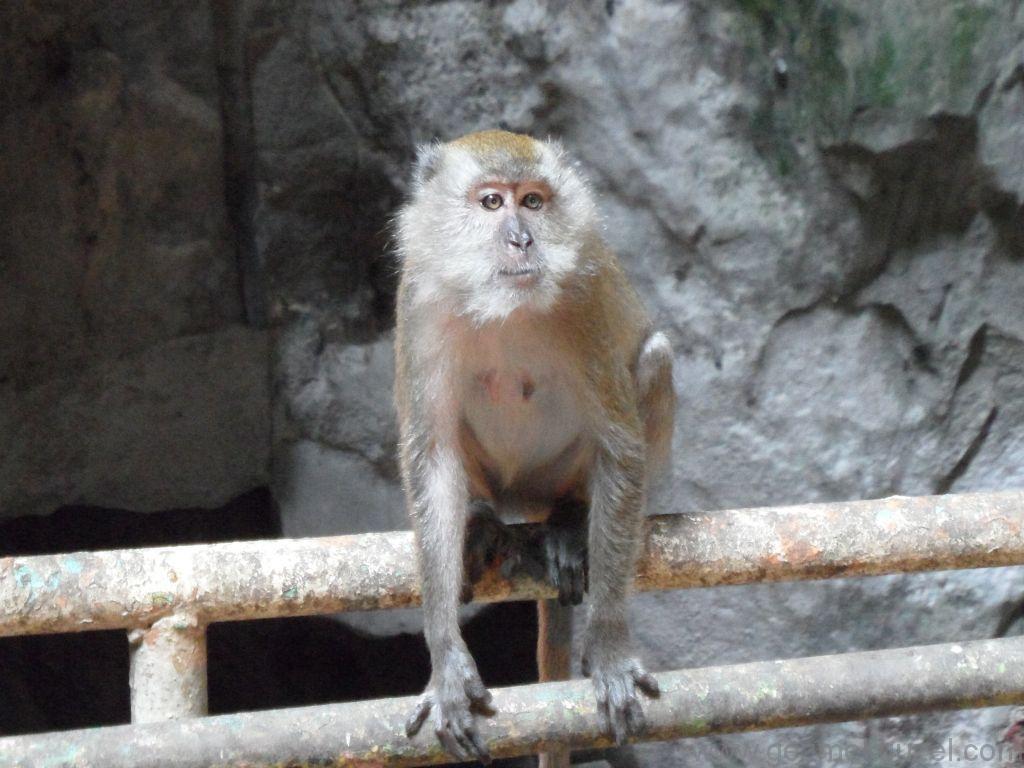 Batu Mağarası Maymunları, Kuala Lumpur Gezilecek Yerler