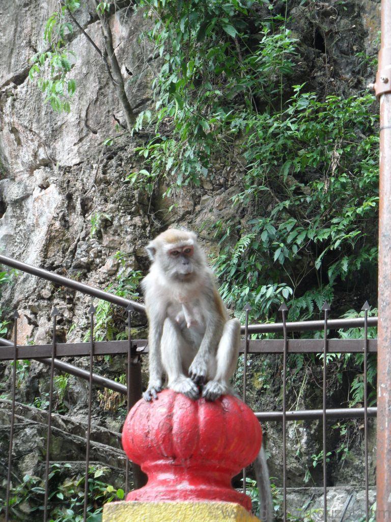 Batu Mağarası Maymunları, Kuala Lumpur Gezisi Notları