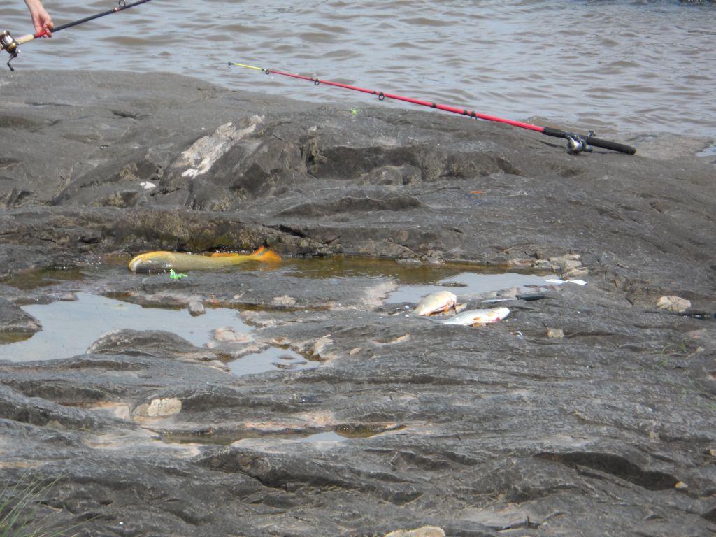 Colonia del Sacramentoda yakalanan nehir balıkları