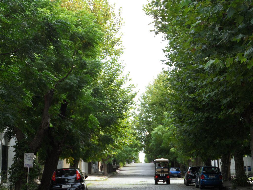Colonia del Sacramentonun yeşil sokakları