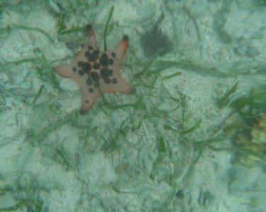 Deniz Yıldızı, Filipinler'de Balayı