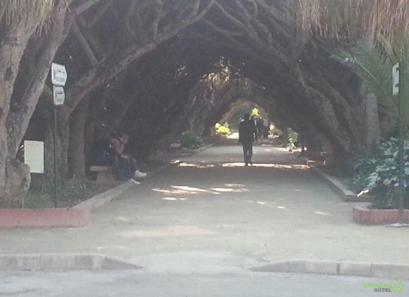 Hama'nın Deneme Bahçesi – Ağaçlı Yol