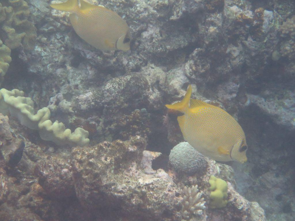 Büyük resifin balıkları