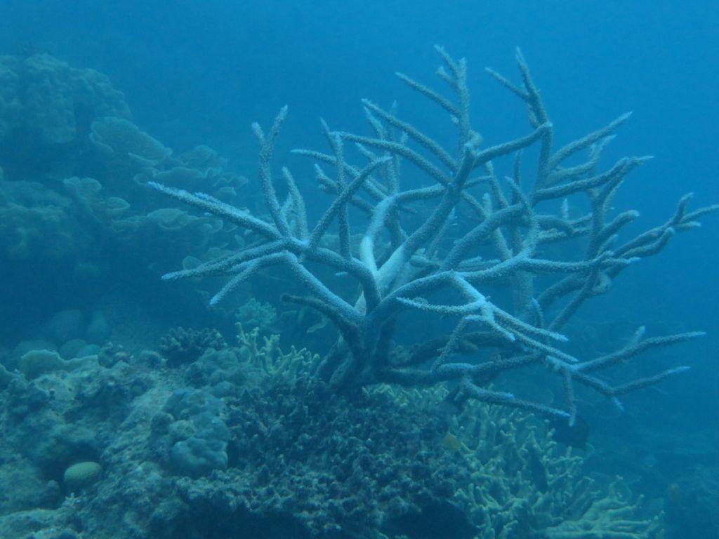 Büyük resif denizaltı