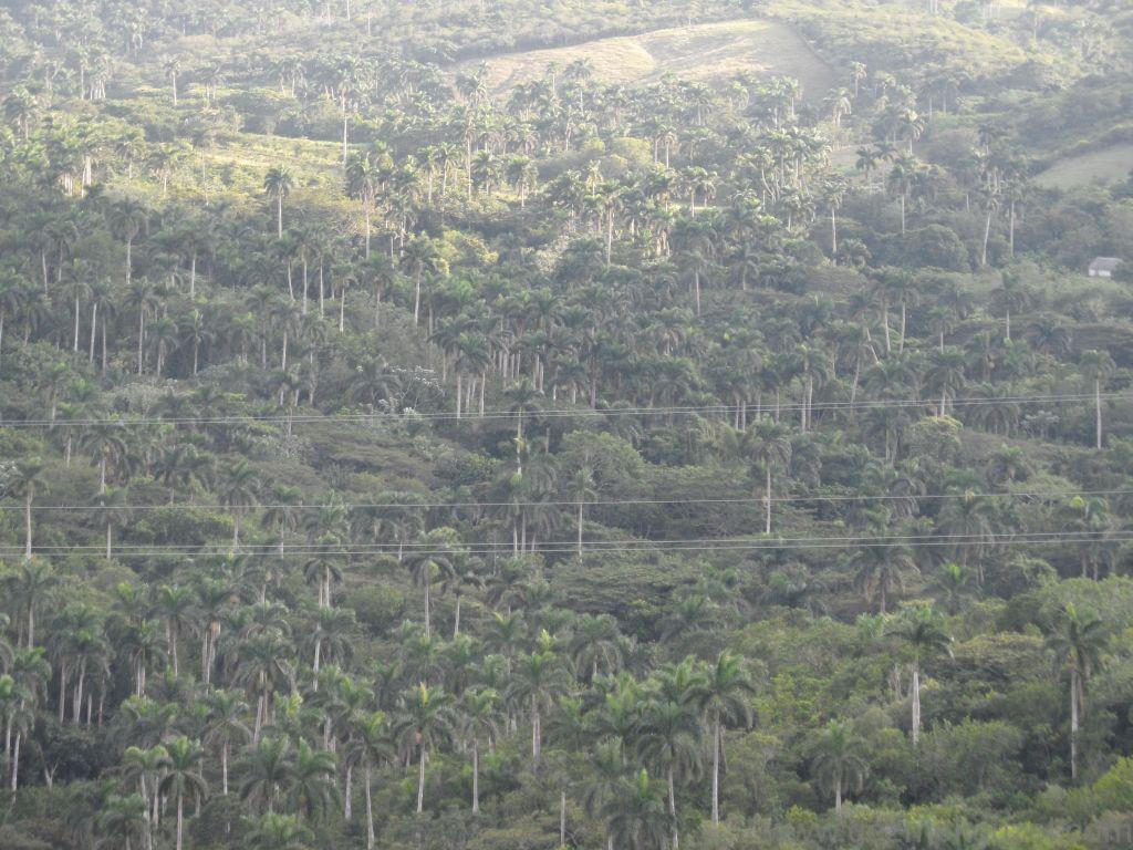 Küba Gezisi Notları, Varadero Gezilecek Yerler, Palmiye Ormanı