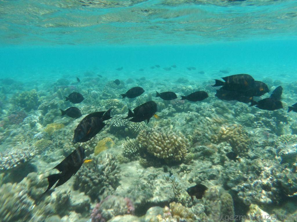 Kıyıda Resifler, Hurghada'nın En İyi Sahil Resifleri