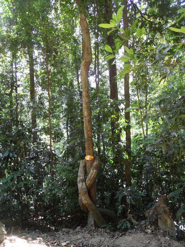 Langkawi'nin Ağaçları, Langkawi Görülecek Yerler, Malezya Gezisi Notları