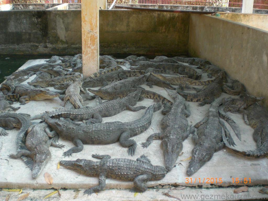 Laos - Kamboçya - Vietnam Gezisi Notları, Kamboçya Gezilecek Yerler, timsah Çiftliği
