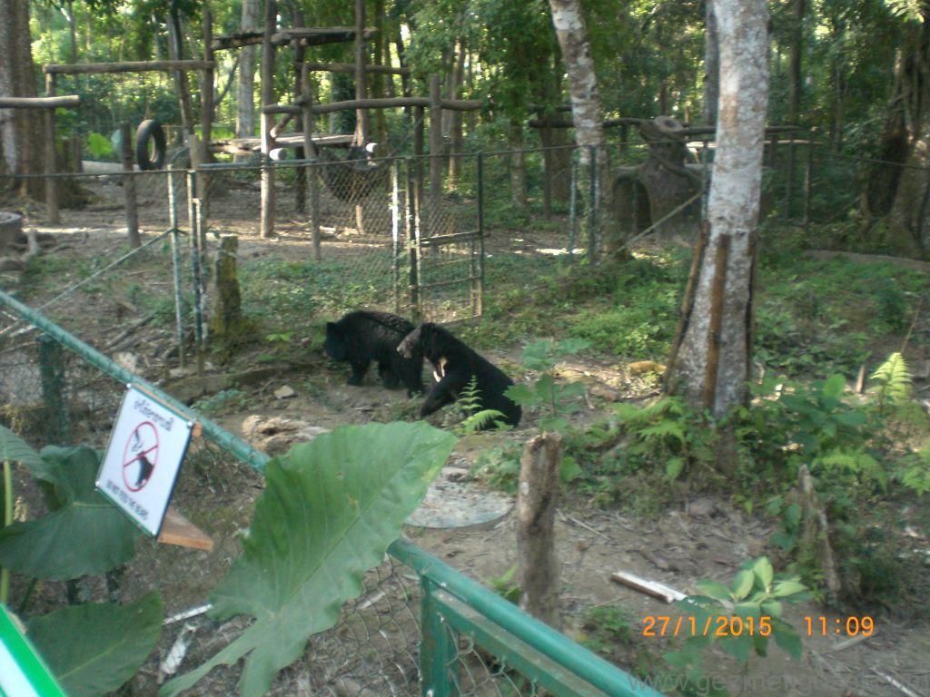 Laos - Kamboçya - Vietnam Gezisi Notları, Laos Gezilecek Yerler, Ayılar