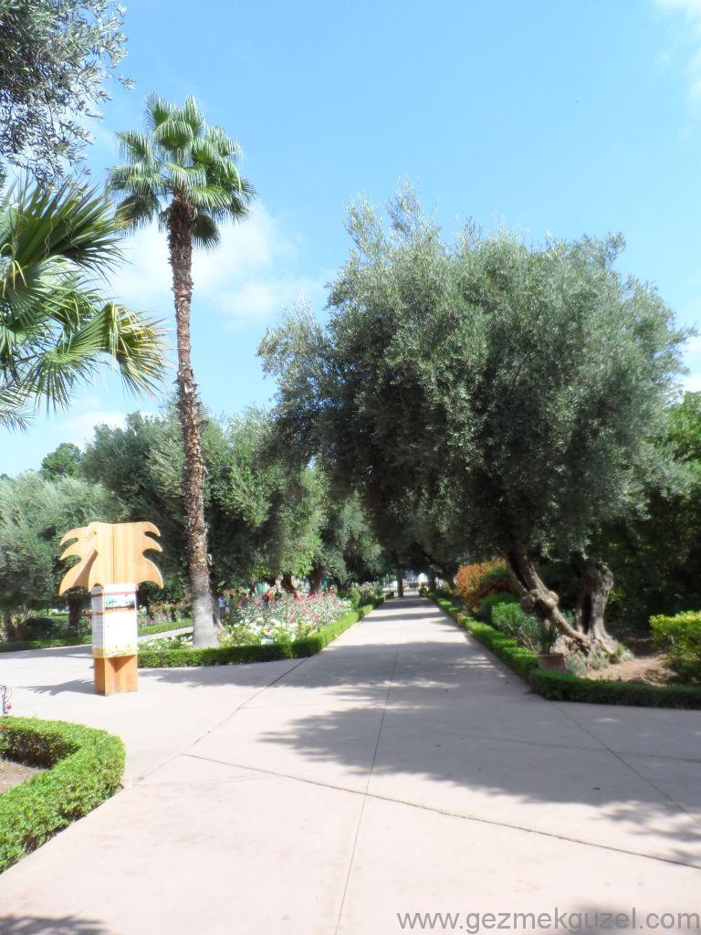 Marakeş Gueliz bölgesinde park