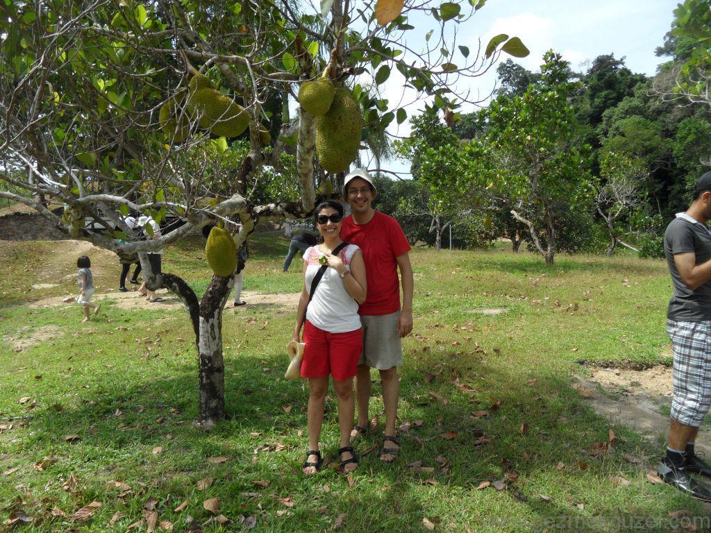 Meyve Bahçesi Turunda, Langkawi Görülecek Yerler, Malezya Gezisi Notları
