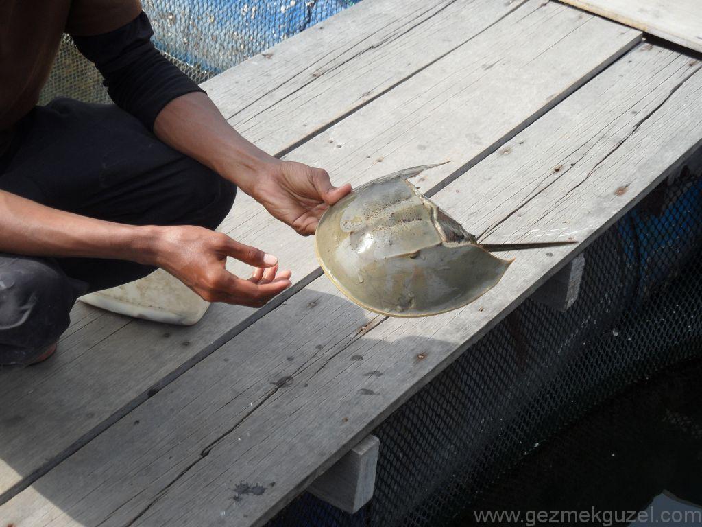 Nal Balığı, Langkawi Görülecek Yerler, Malezya Gezisi Notları
