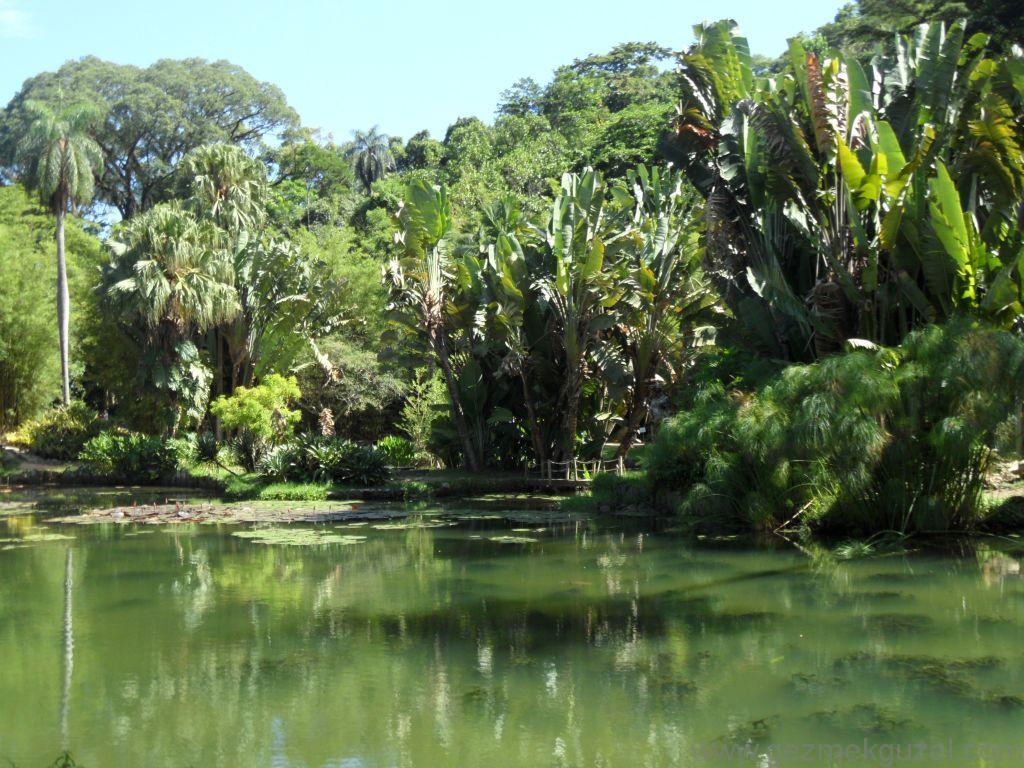 Rio de Janerio Botanik Bahçesi, Rio Gezisi, Brezilya Gezisi Notları
