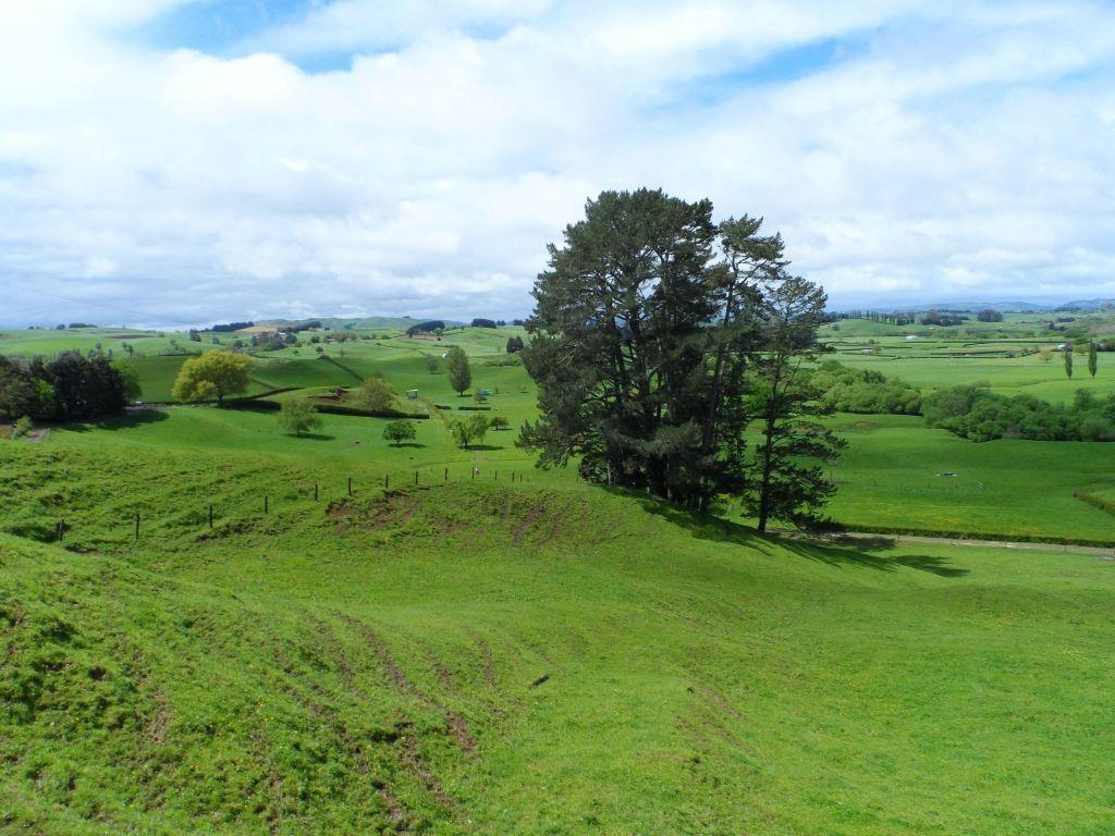Yeni Zelanda yeşili