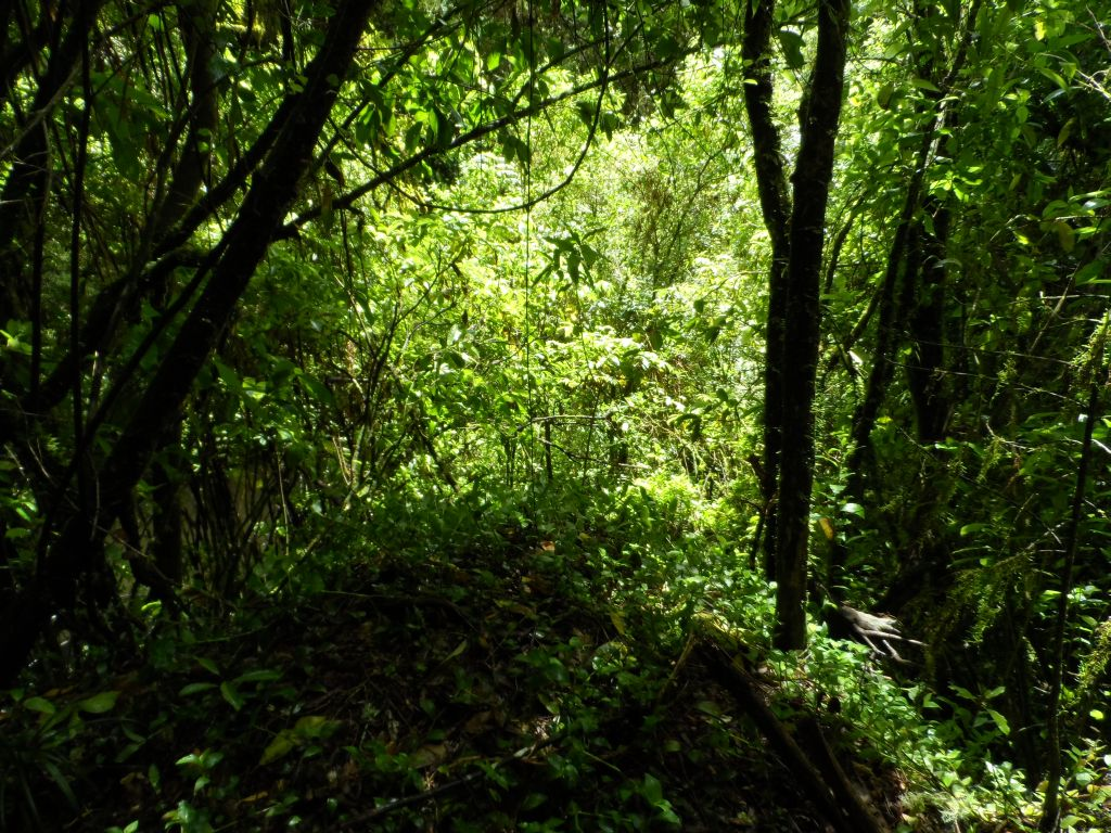 Waitomo mağarası girişinden