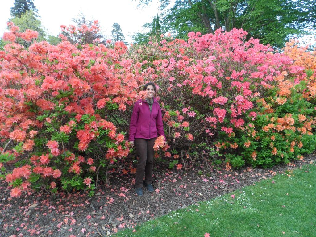 Christchurch'de Botanik parkında