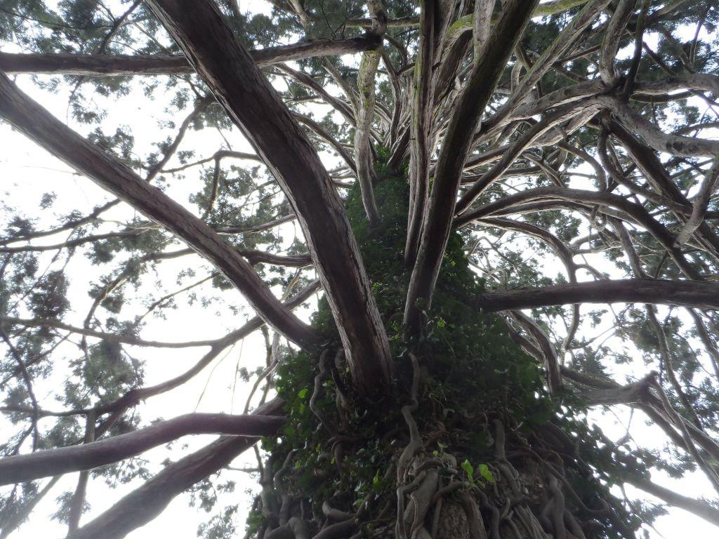 Yeni Zelanda Ağaçları