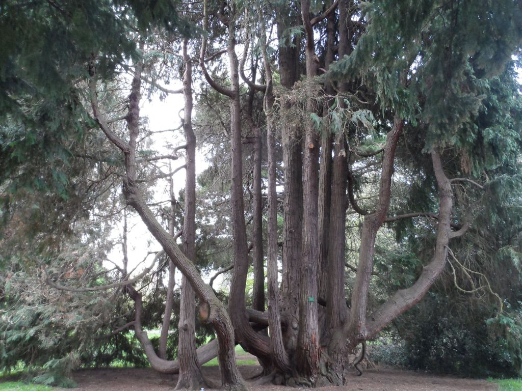 Yeni Zelanda'nın enfes ağaçlarından
