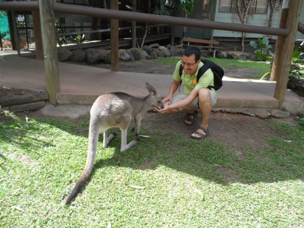 Avustralya'da Kanguru beslerken