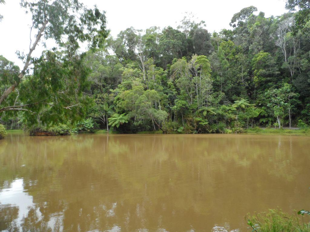 Kuranda'da yağmur ormanı