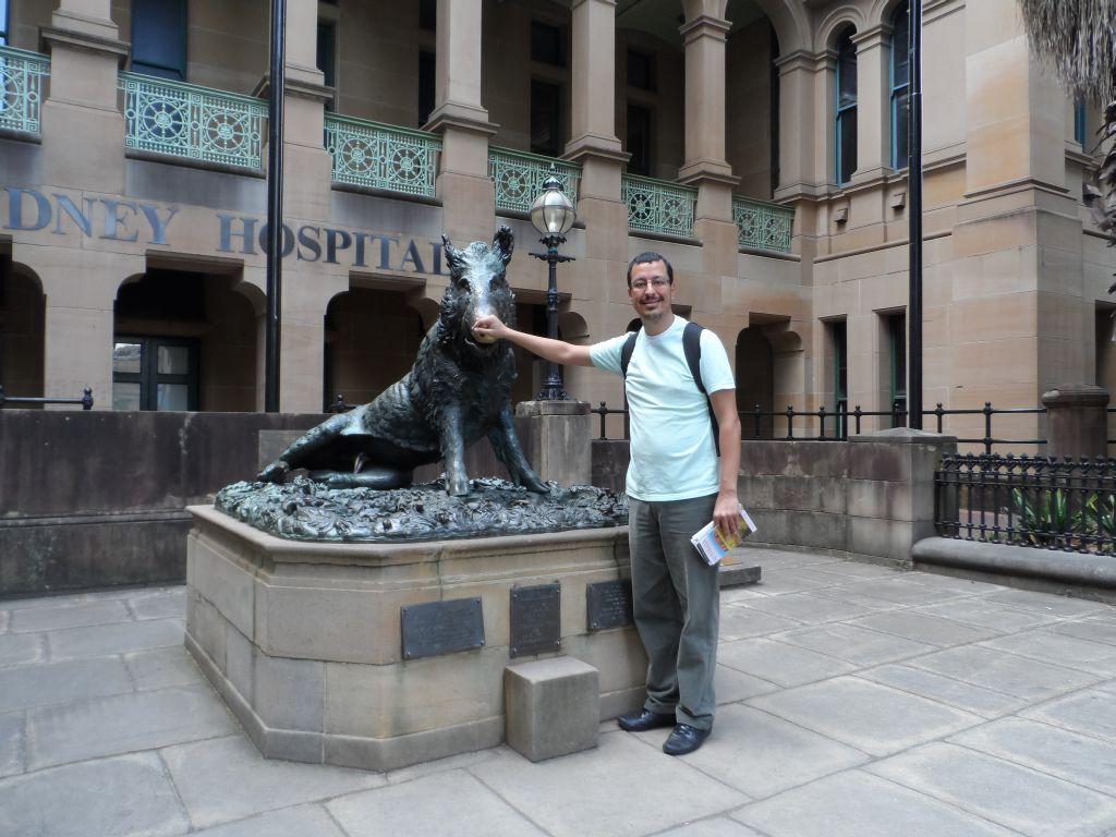Sydney hastanesi bahçesindeki domuz heykeli