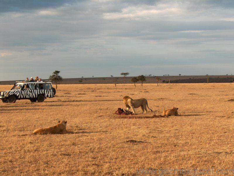 Safaride Aslan Avı Kenya