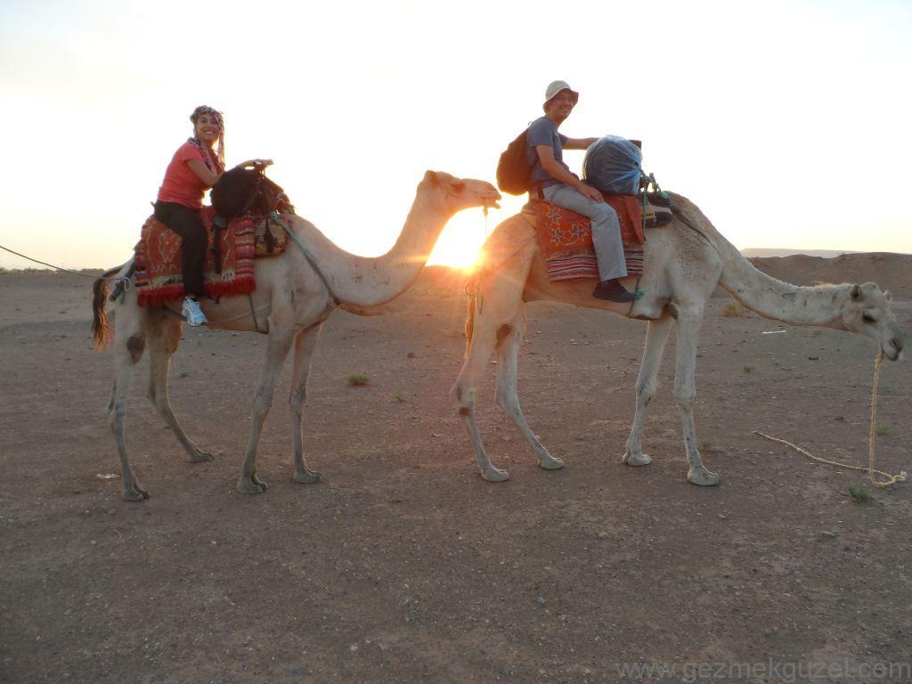 Sahra Çölünde Deve Yolculuğu Fas