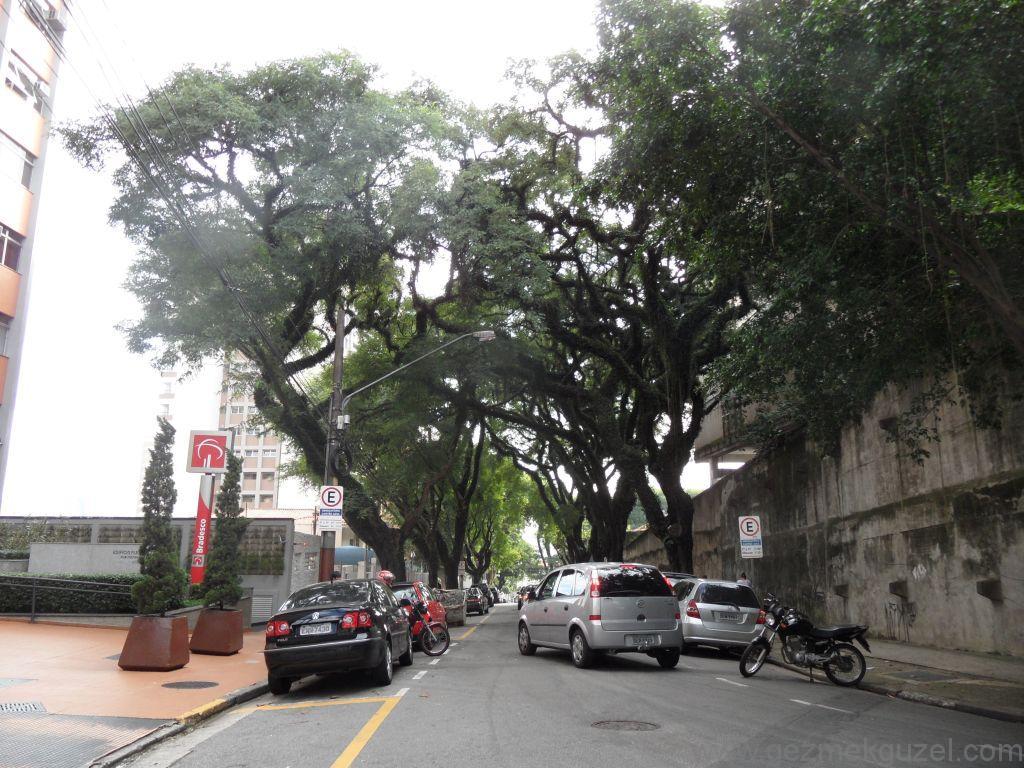 Sao Paulo sokaklarından, Brezilya Gezisi Notları