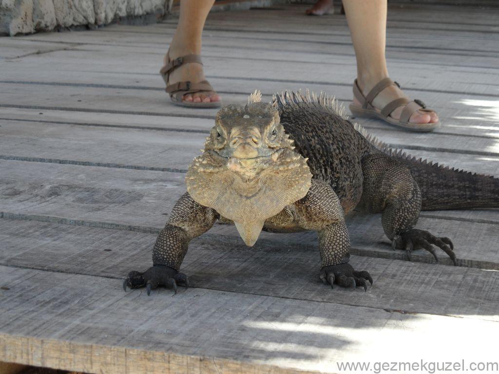 Trinidad Yapılacak Şeyler, Iguana Adası Ziyareti
