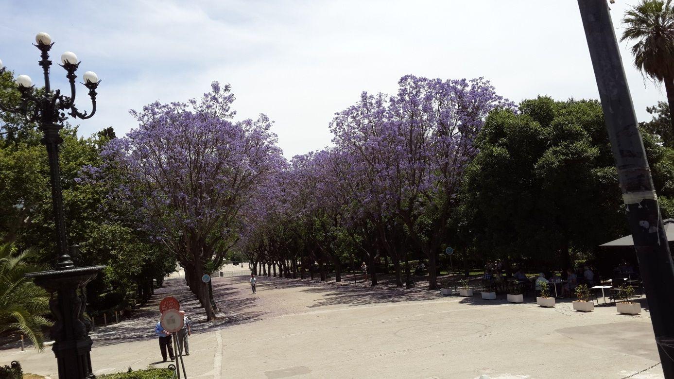 Yeşili çiçeği bol Atina